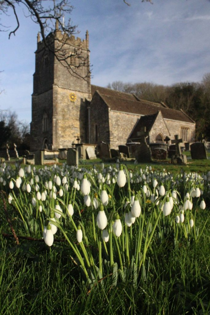 Snowdrops by Tytherington Church, Gloucestershire