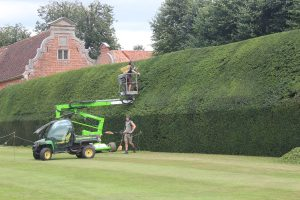 Cutting the yew hedges